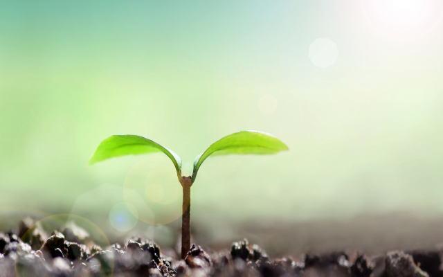 種まき・成長イメージ画像