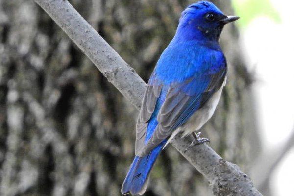 幸せの青い鳥はどこに? メガネを額にかけて眼鏡を探すのといっしょ?・・・シングルマザーへのメッセージ【303】