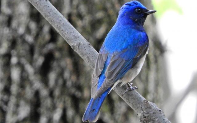 幸せの青い鳥イメージ画像